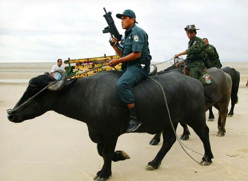 Бразилия и борьба с преступностью