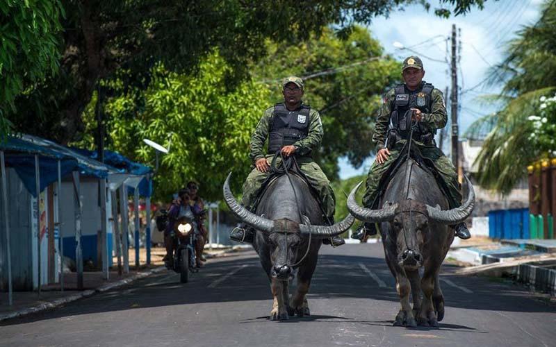Стражи порядка на буйволах