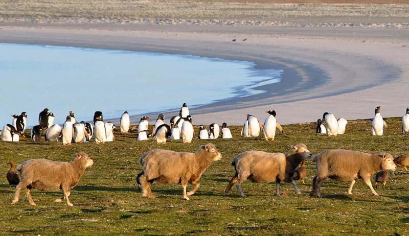 Где находятся и что представляют собой Фолклендские острова