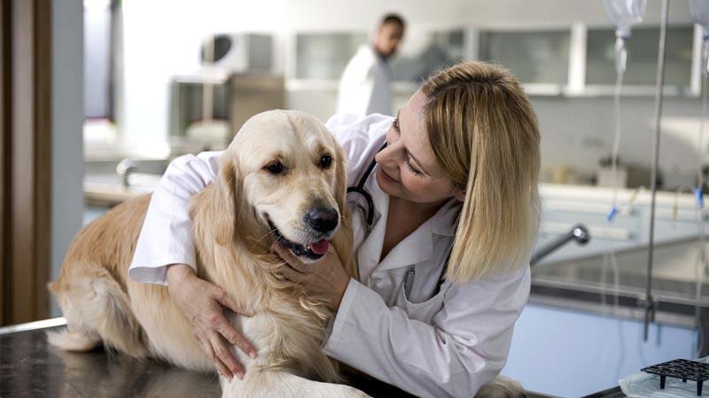 Психолог для домашних животных