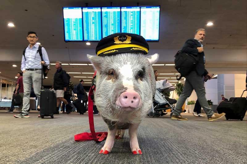 Лилу работает в аэропорту