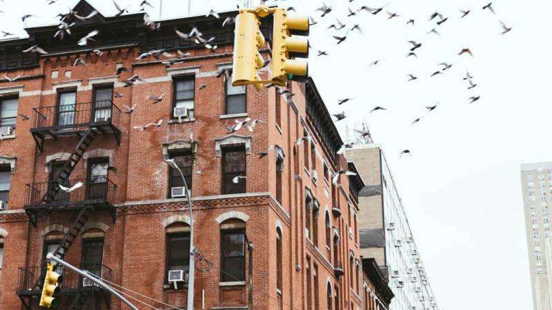 Суть нового закона защиты птиц