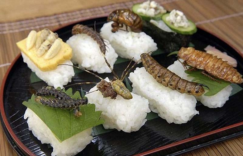 Жареные осы: японский деликатес