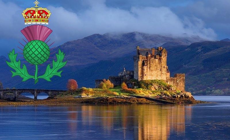 свыше 500 лет чертополох считают национальным растением Шотландии