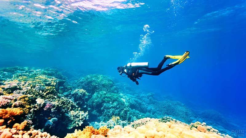 Специалисты ныряют, достают из воды части сломанных кораллов