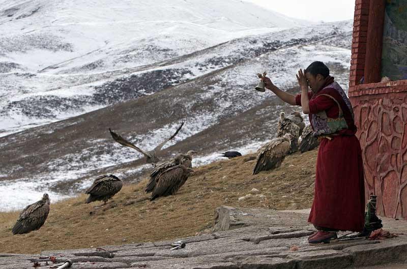 в Тибете. Простые люди здесь нередко прощаются с усопшими, вынося расчлененные части умершего в горы, чтобы там их съели грифы