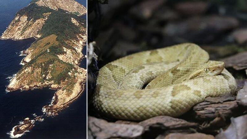 Самая известная бразильская легенда о появлении змей на острове гласит о том, что много лет назад на этот участок суши высадились пираты, чтобы запрятать на нем свой клад.
