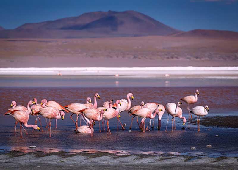 Нереальный пейзаж и фламинго