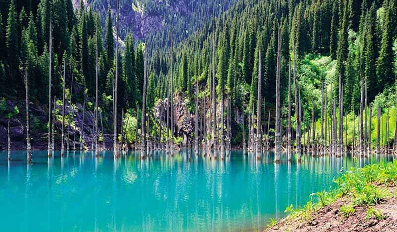 Озеро Каинды в Казахстане, которое раньше было лесом