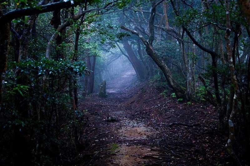 Хойя Бачу: лес, где происходят странные явления