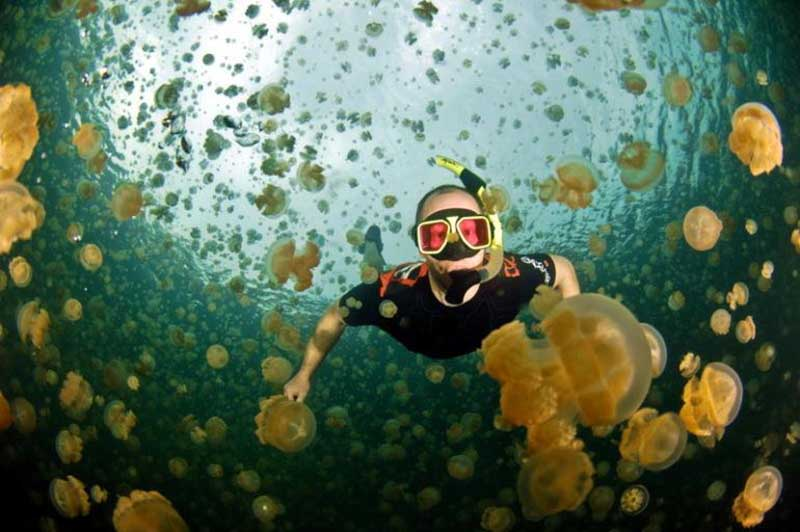 Озеро Медуз в Палау, в водах которого миллионы особей медуз