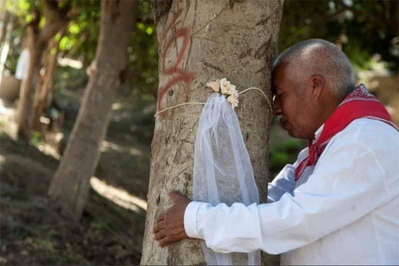 По какой причине мужчины Индии берут в жены дерево