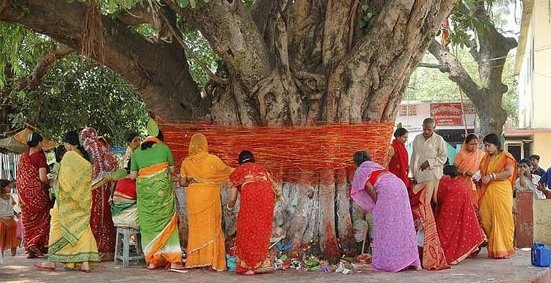 Женитьба с деревом