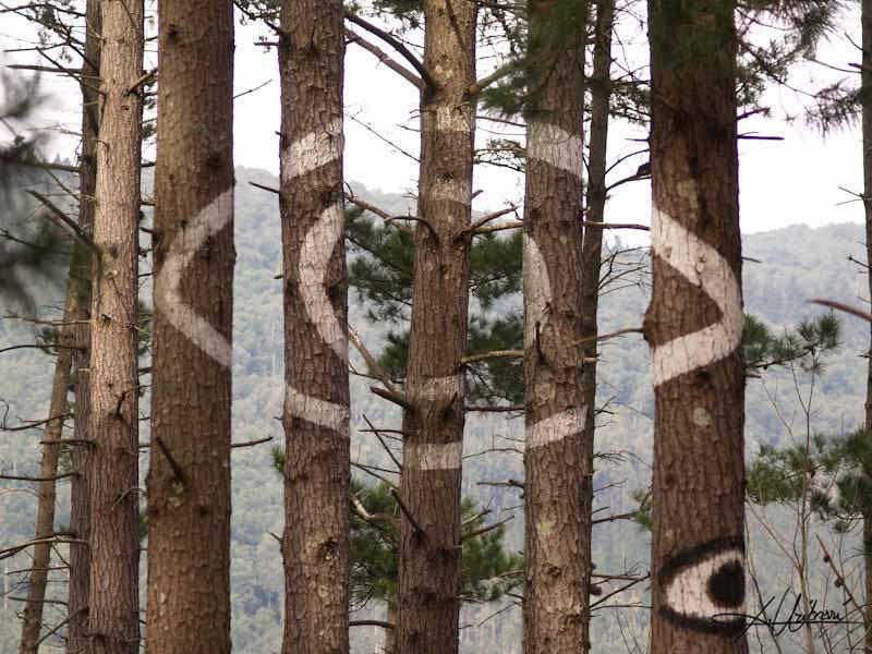 Веселый лес в долине Ома, разукрашенный в разные цвета
