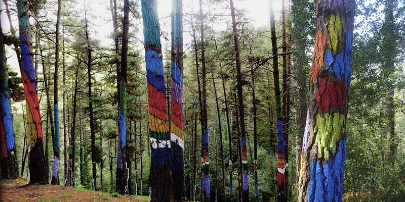 Растущие деревья в качестве холста