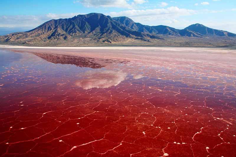 Странное озеро Натрон, в котором вода ярко-красного цвета