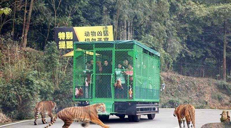Проект необычного зоопарка возник в 2015 году, в ходе разработки и проектирования которого продали билеты на несколько месяцев вперед.