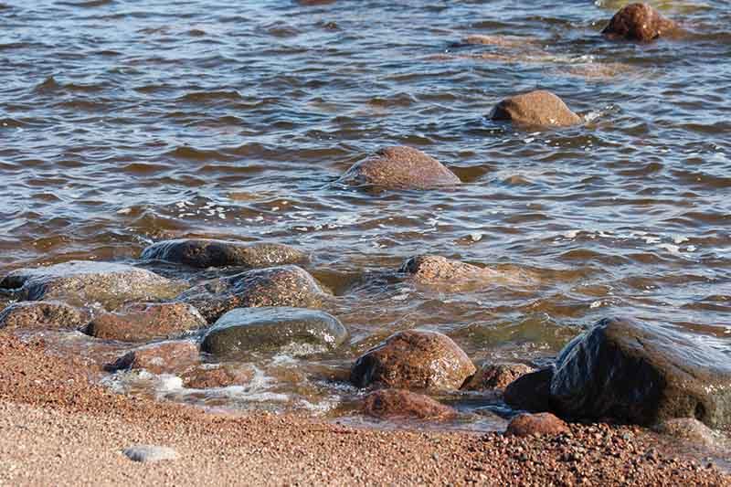 В чем опасность вод Финского залива для здоровья человека?