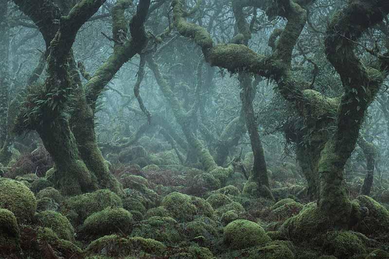 Таинственность Вистманского леса и как он выглядит