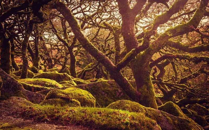 Согласно другой легенде, в Вистманском лесу проживали гончие псы, которых контролировал сам дьявол.
