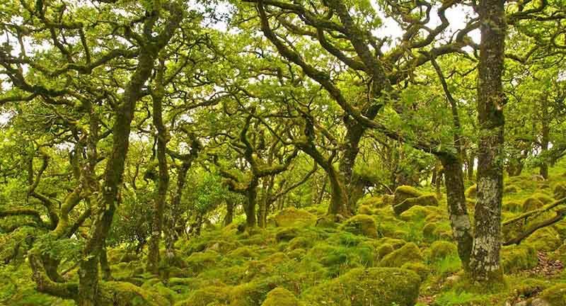 В британском лесу Вистмана любознательные путешественники в полной мере могут ощутить себя в месте