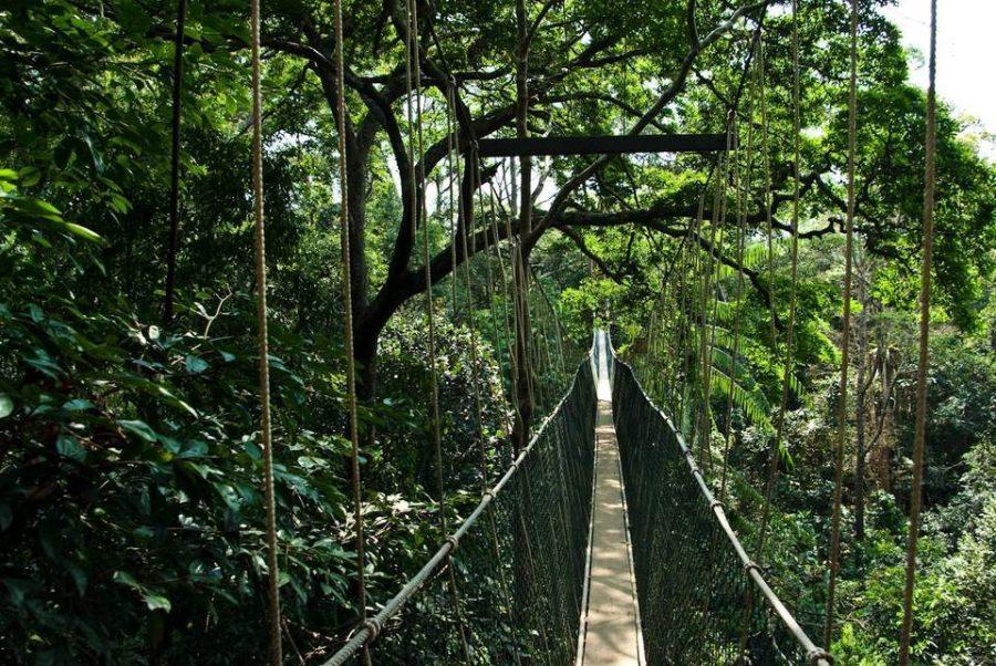 Мост-тропа в национальном парке Таман-Негара
