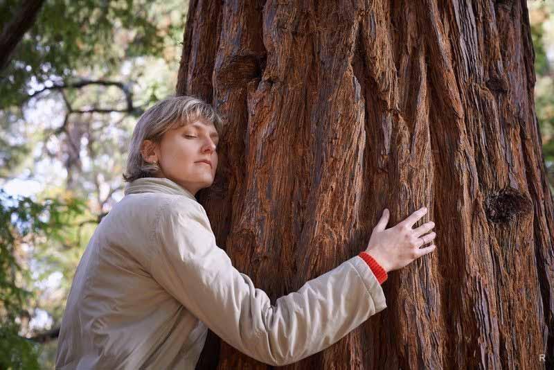 Переписка с деревьями в Австралии: о чем рассказывают люди?