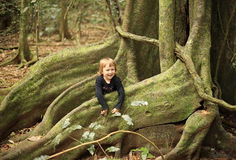 На деревья стали прикреплять электронные адреса и персональные идентификаторы.