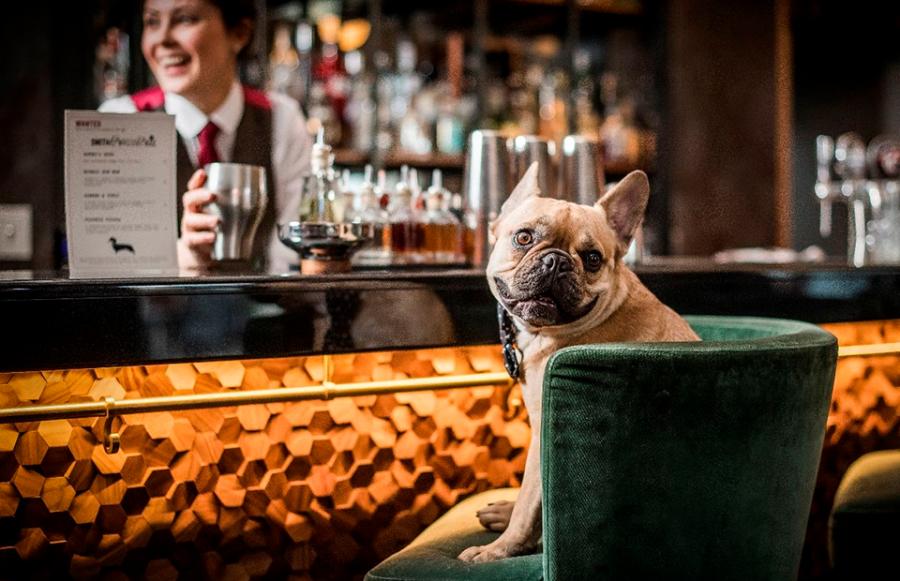 Собака в баре