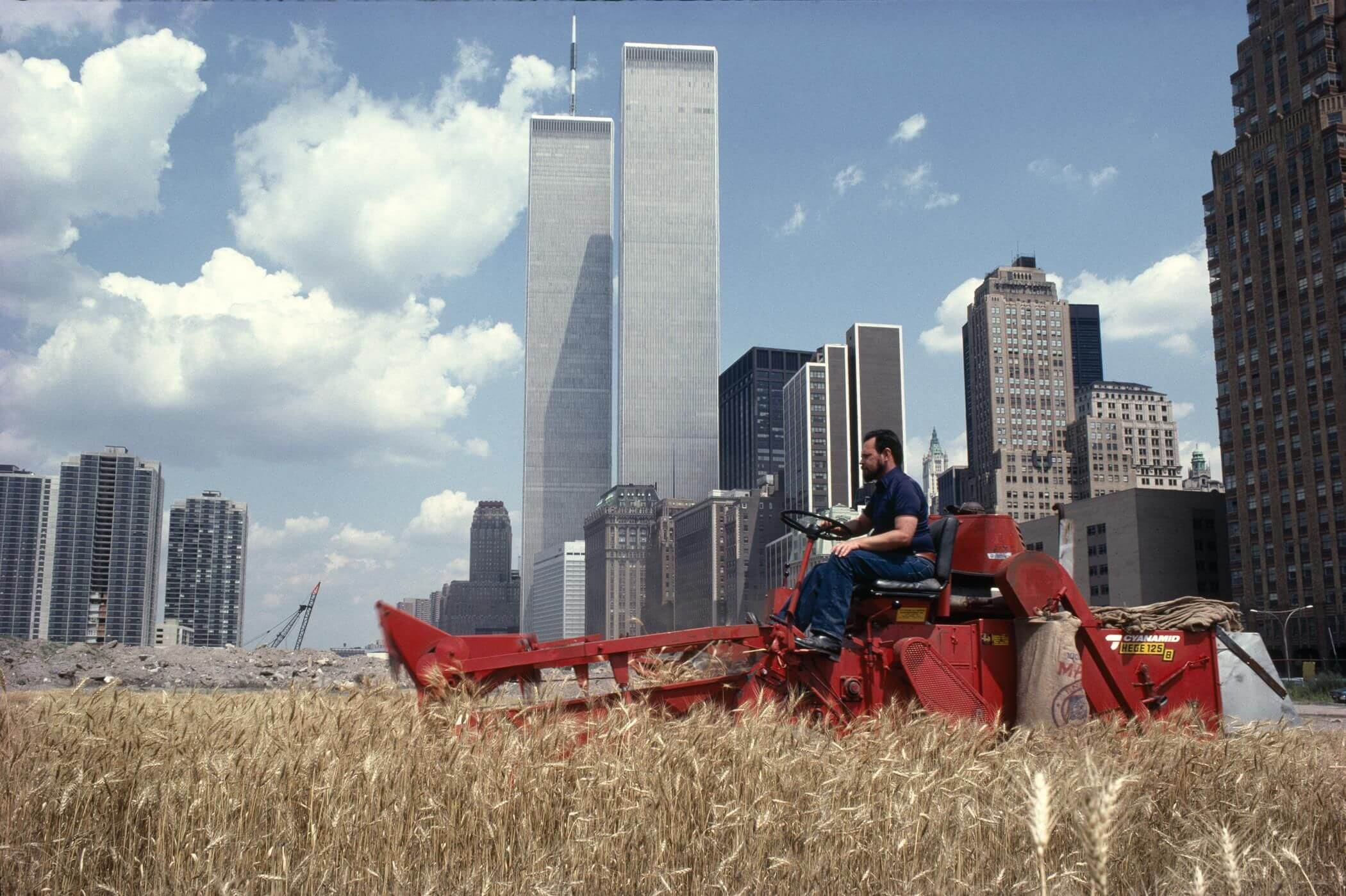 Пшеница в центре Манхэттена