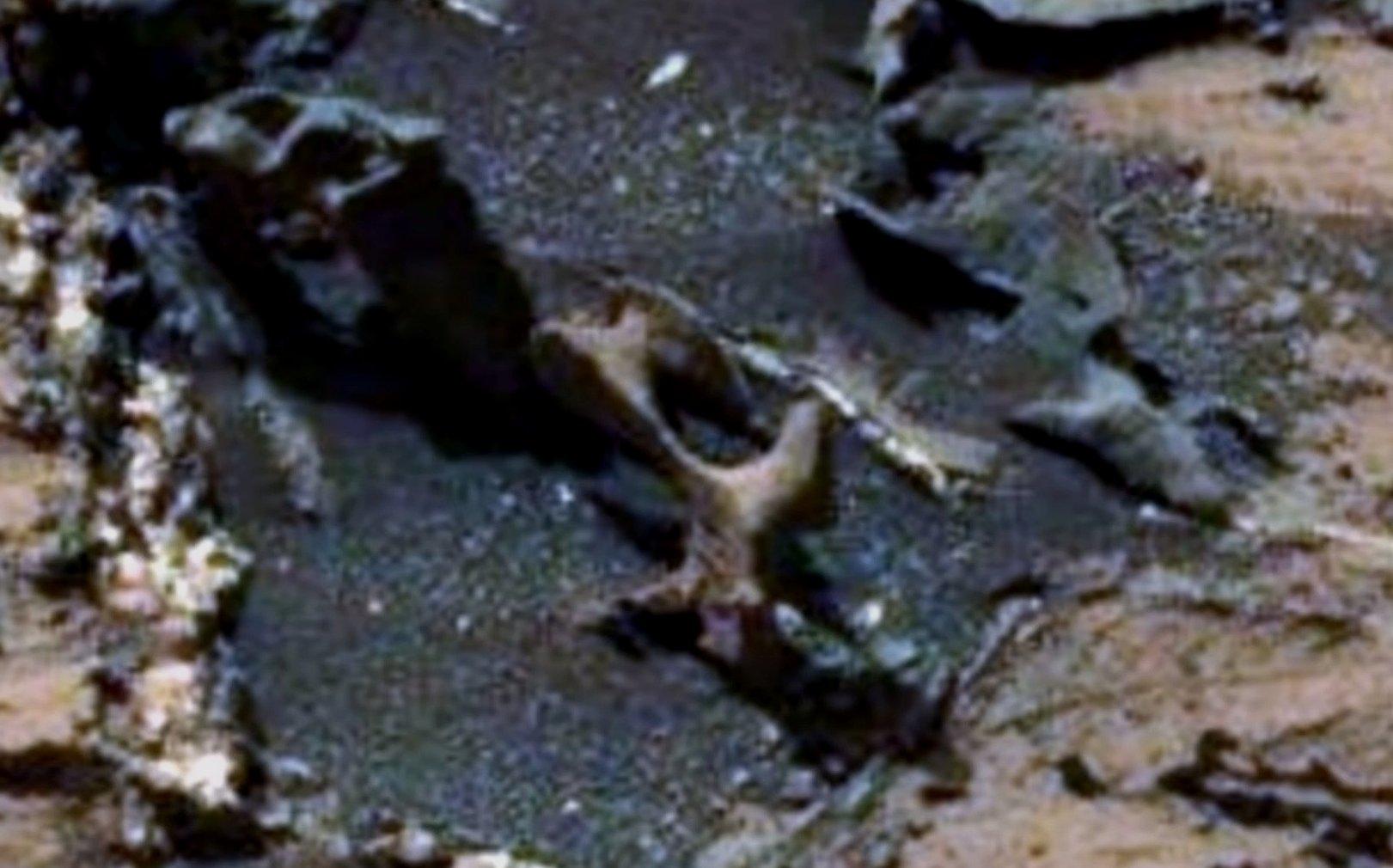 Кости на Марсе