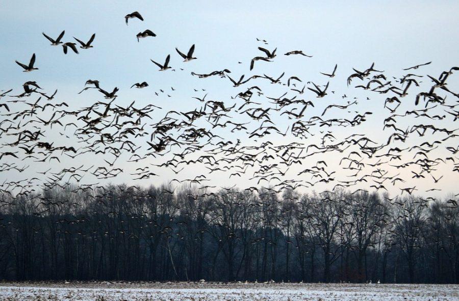 Птицы улетают зимовать