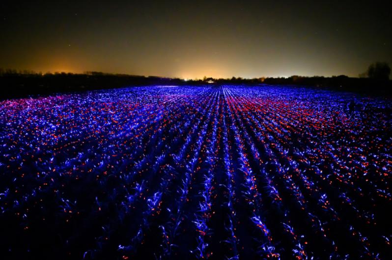 Лук-порей на полях Нидерландов