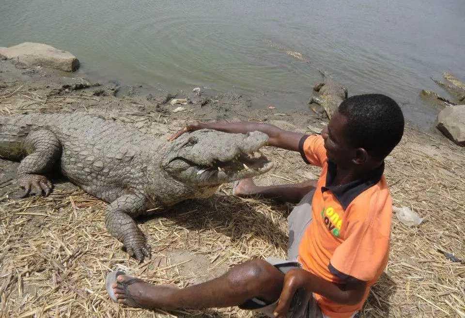 Крокодилы в республике Гана