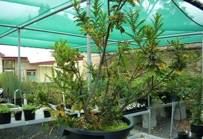 Дерево со способностью клонироваться