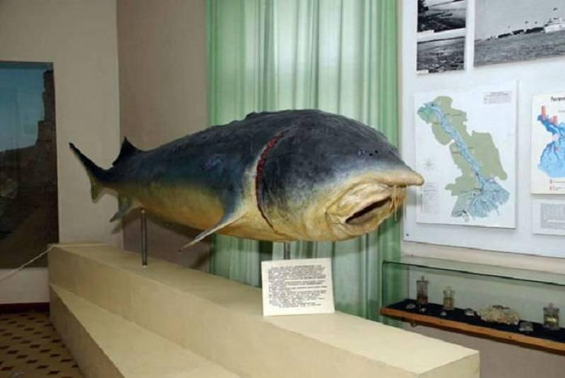 Чучело рыбы в музее