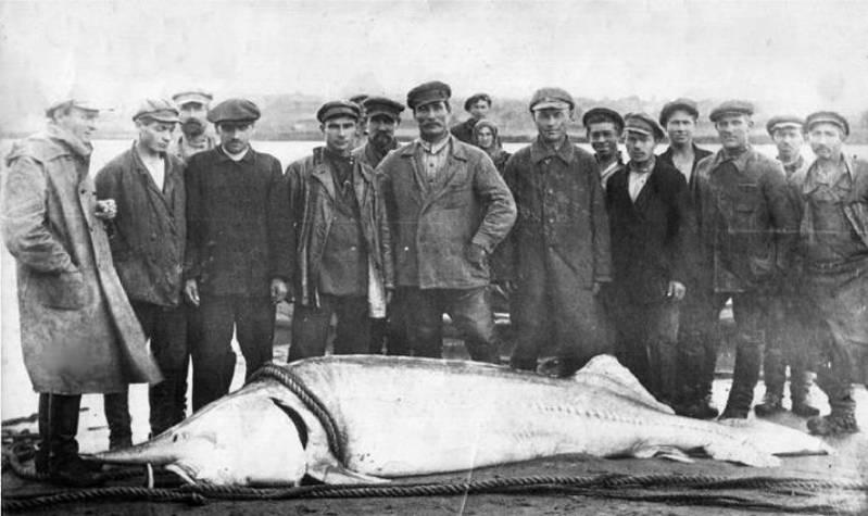 Рыба из реки Волга