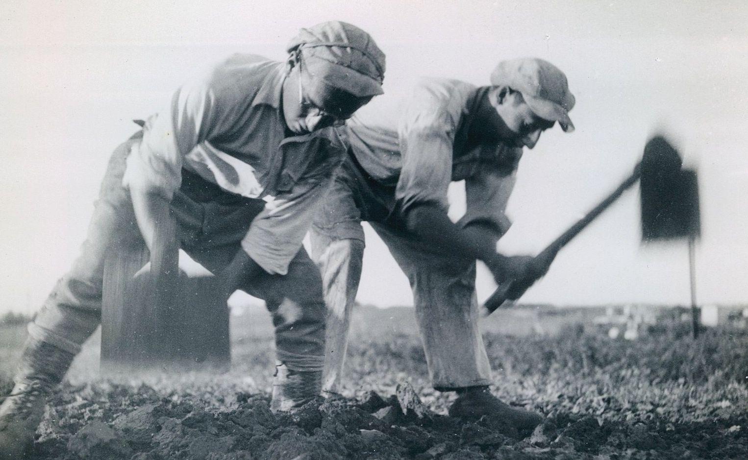 Новозеландские фермеры