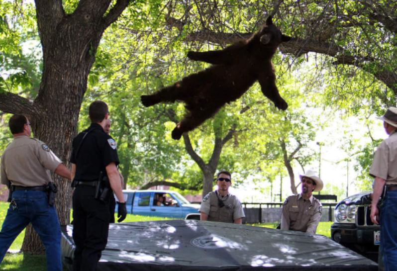 Летающий медведь