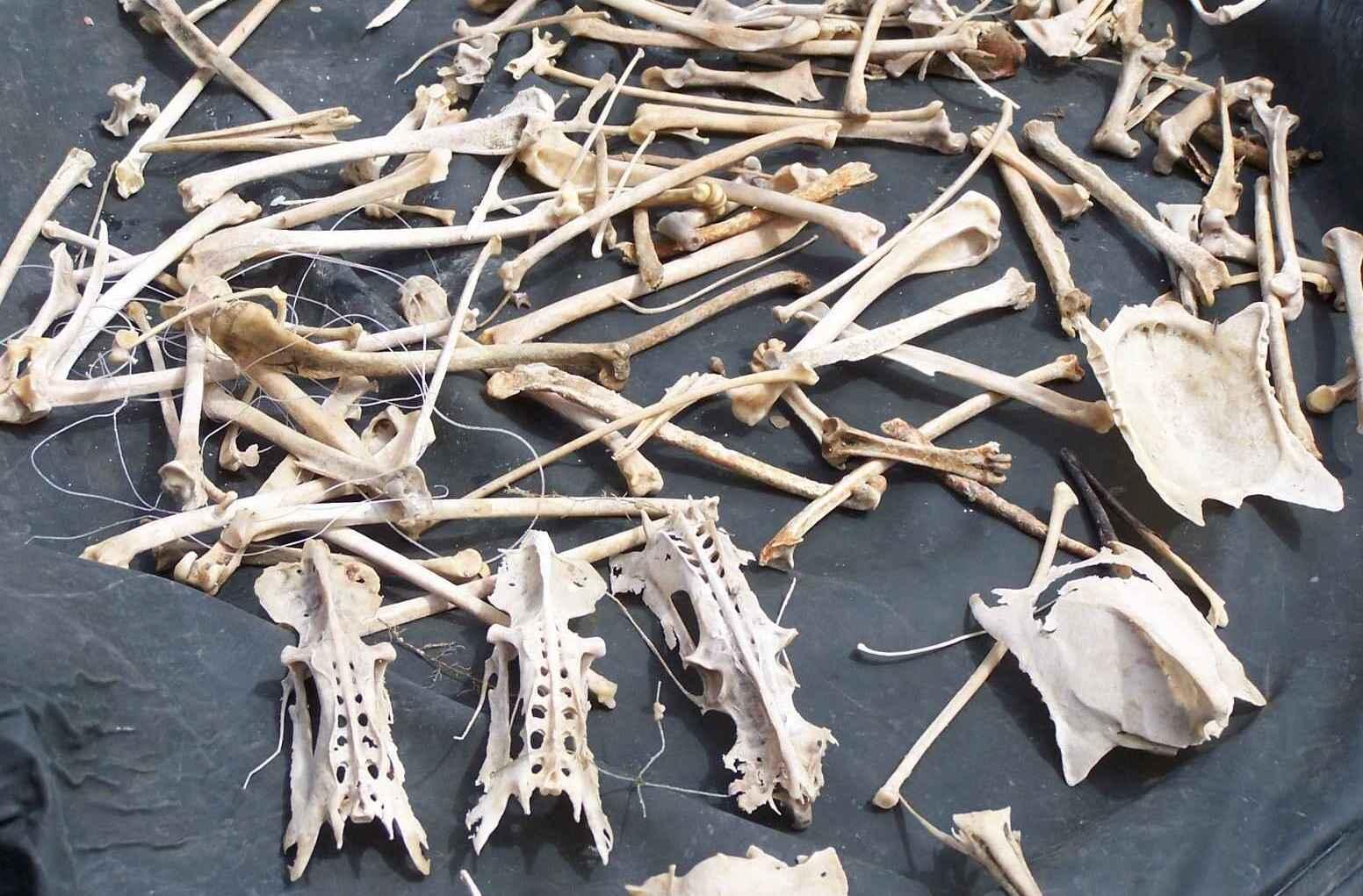 Птичьи кости