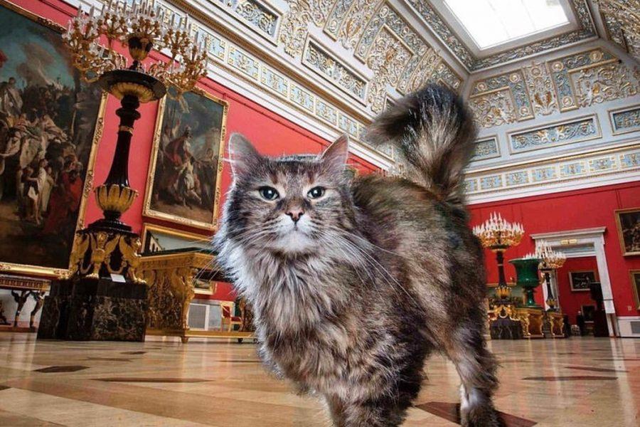 Кот в Эрмитаже