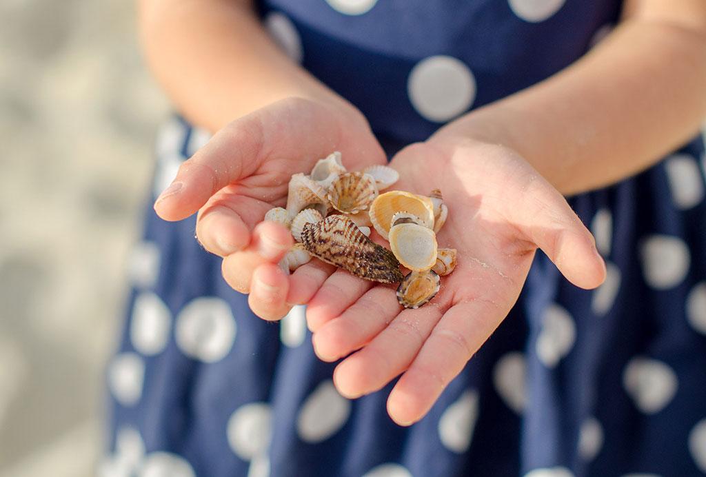 Ракушки в руках ребенка