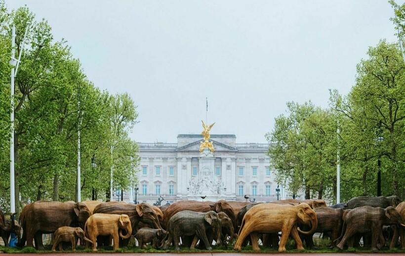Слоны под окнами Букингемского дворца