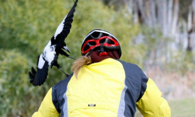 Велосипедист в шлеме