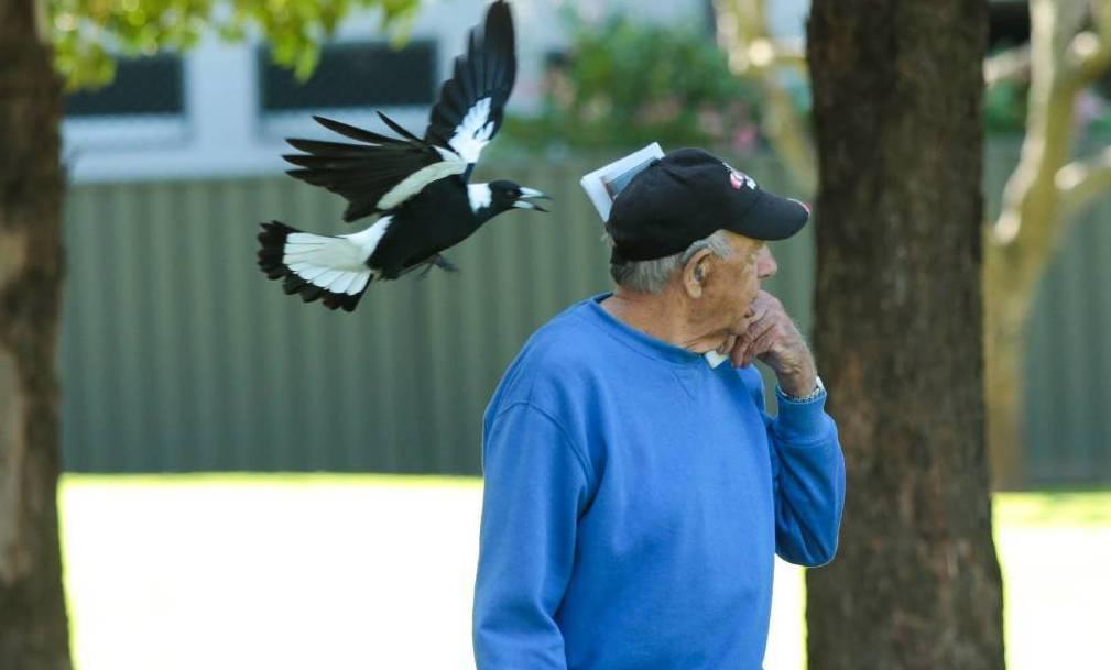 Нападение птицы