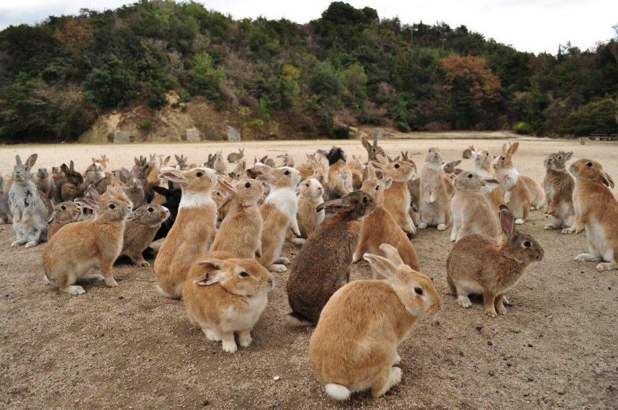 Окуносима в Японии