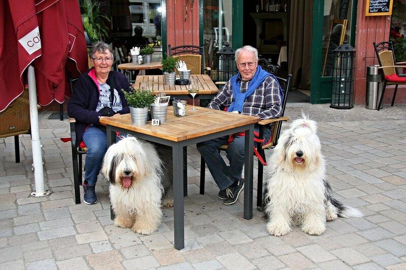 Собаки в Германии