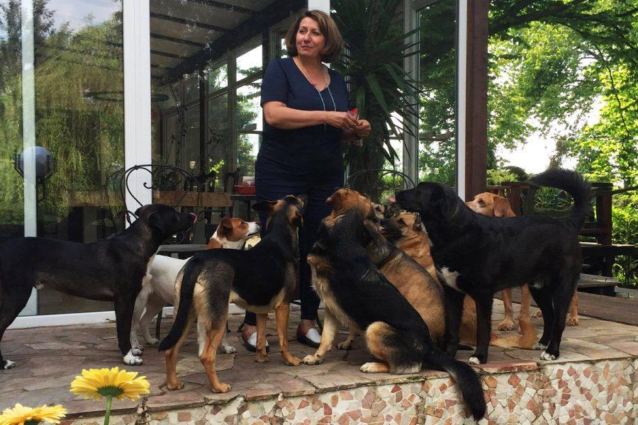 Приют для собак в Германии