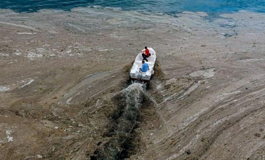 Морская слизь