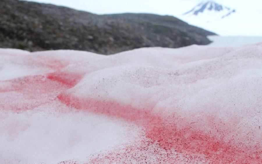 Красный снег